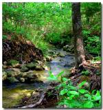 05 11 02 creek beyond falls rayburn, Canon G2 .jpg