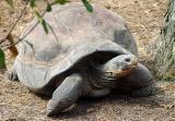 03 08 03, Tortoise 2, Ellen Trout Zoo, sony 717.jpg