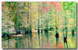 03 17 03 swamp , sony 717 2.jpg