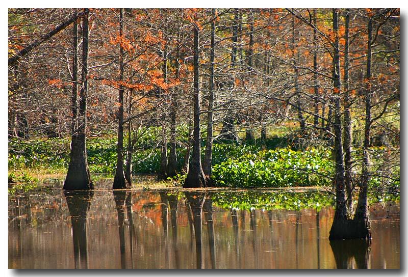 12 06 03  winter swamp, Canon 300D.jpg