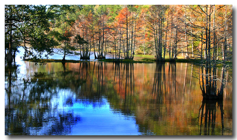 12 06 03 late autumn in the swamp, Canon 300D.jpg