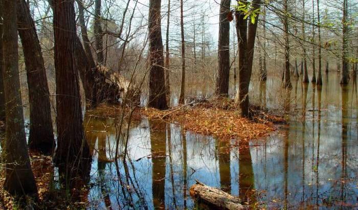 03 15 03  pond reflections, sony 717.jpg