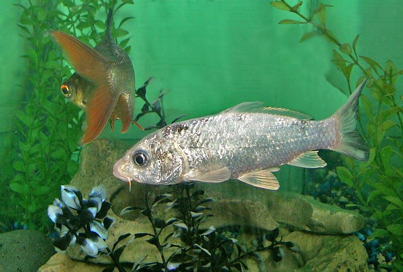 08 28 04 Aquarena Wetlands  Aquarium, San Marcos, TX, Minolta A1.jpg