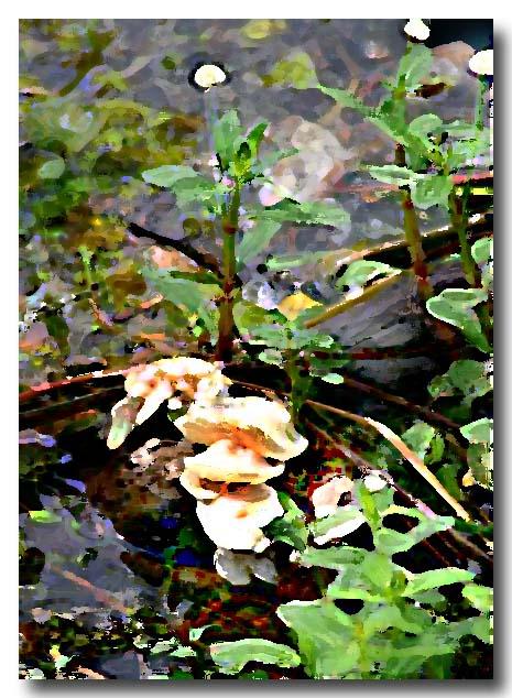 05 03 03 ,fungi, 10D canon.JPG