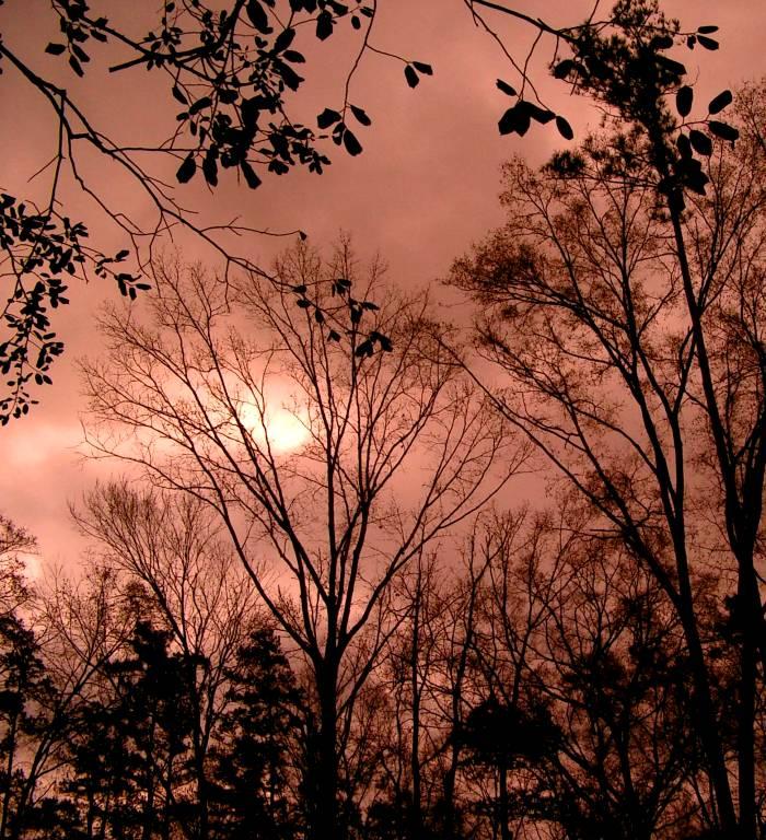 01 20 03 redish sky with tree silhouette, casio.jpg