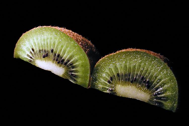 Kiwi Kiwi by:<br><b>Greg Ladner