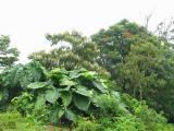 Vegetation.JPG