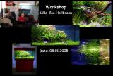 Aquatic Plant Aquarium - Workshop's