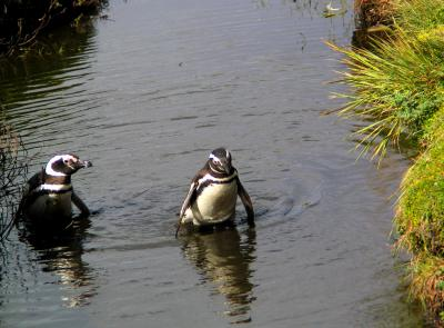 Swimming Lesson, Otway Sound, Patagonia, Chile, 2004