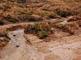 Rare permanent running water