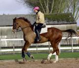 Eric's horses Feb 04