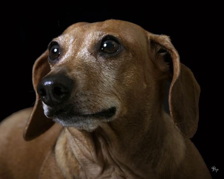 Feb. 25, 2005 - Portrait of a dog