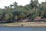 Between Luxor and Esna