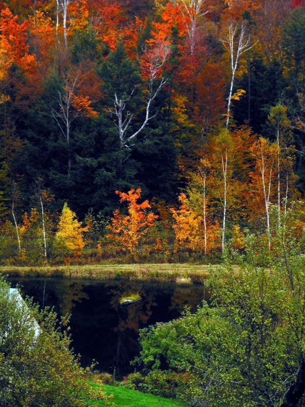 Eccopond last autumn