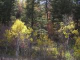 Autumn in the Mountains, Pocatello, Idaho