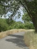 Portneuf Greenway Trail by Portneuf River, Pocatello, Idaho