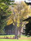 Campus Autumn Scene PA110014.jpg