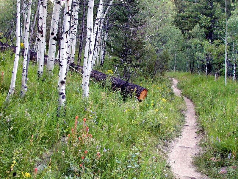 West Fork, Mink Creek Trail, Pocatello, Idaho