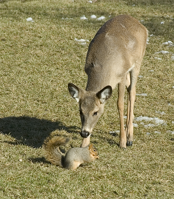 deer and squirrel.jpg4email