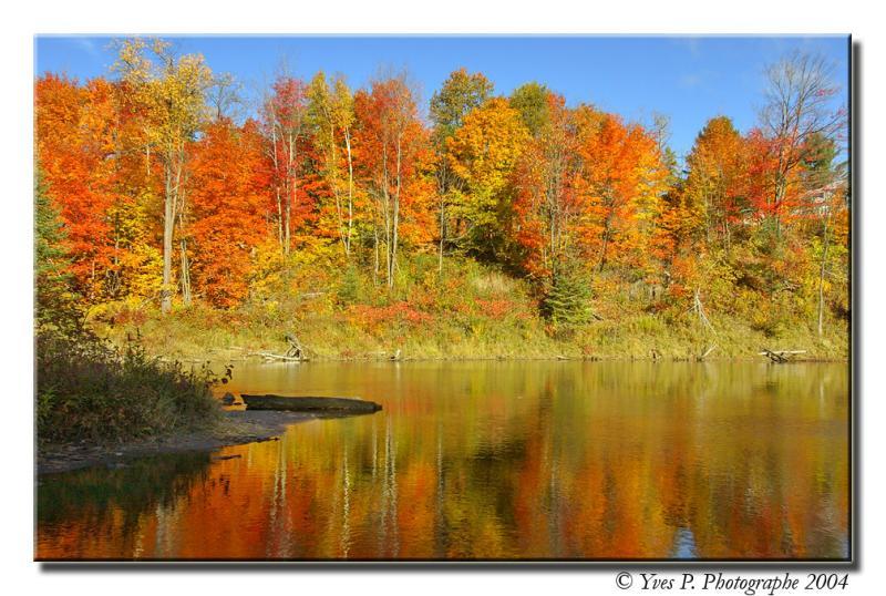 Fall Reflection ...