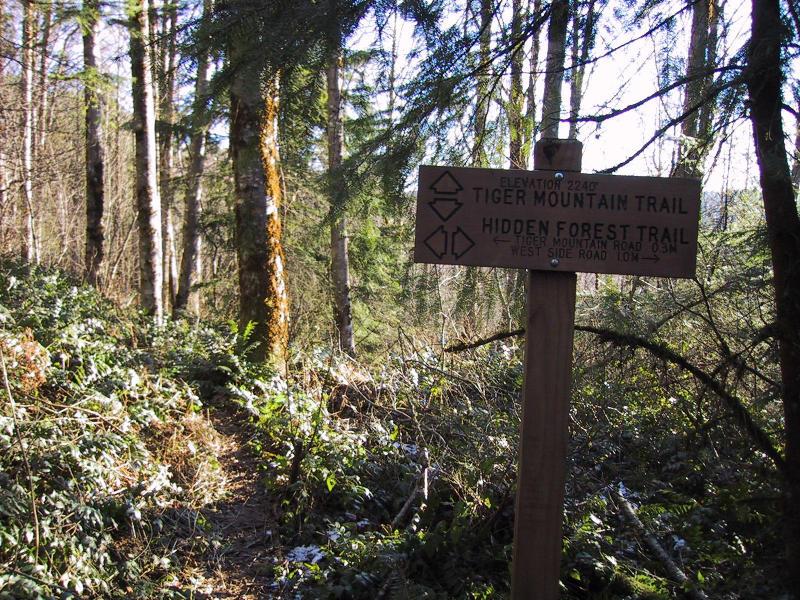 Hidden Forest & TMT intersection