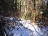 Bootleg Trail (11.2)