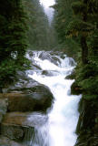 Rapids-Mt Rainier NP, WA - 1970