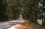 Road near Sintra, Portugal