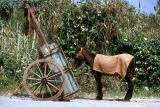 Portuguese roadside scene