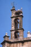 Stork's Nest - Spain