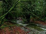 Rain forest 1.jpg
