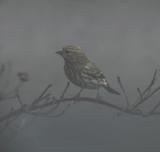 Misty view 2.jpg
