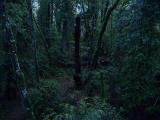 Deep in the rain forest.jpg
