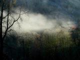 Early morning sun and mist.jpg