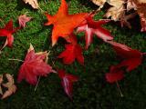 Herbstbllätter