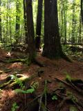 37_woods_gd_4w.jpg