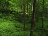 Seoul trees