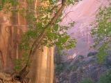Cool Evening, Zion Narrows