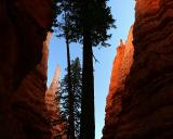 In Wall Street.  Bryce Canyon