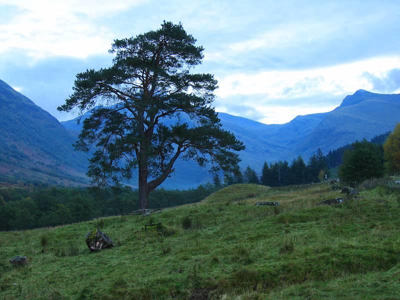 Lone Pine Glen Nevis