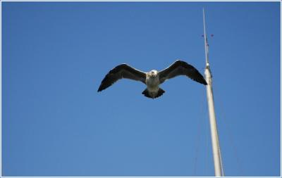 ...fly like an eagle, let your spirt run free