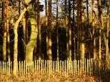 February 23 2004:Woods of Golden Green