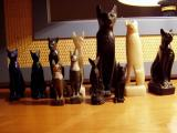 Cat collection.JPG
