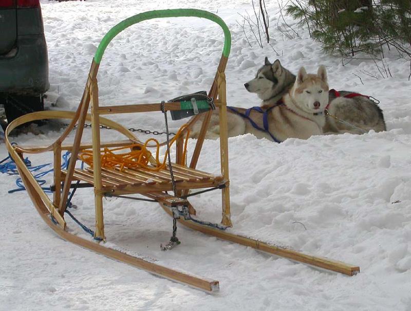 dog-sled.jpg