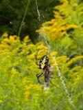 Spider B on Aug, 10