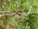 Spider A on Aug. 13