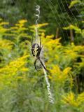 Spider B on Aug. 13