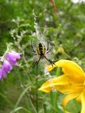 Spider G on Aug. 13