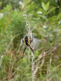 Spider H on Aug. 13