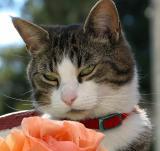 Tinker & a Rose